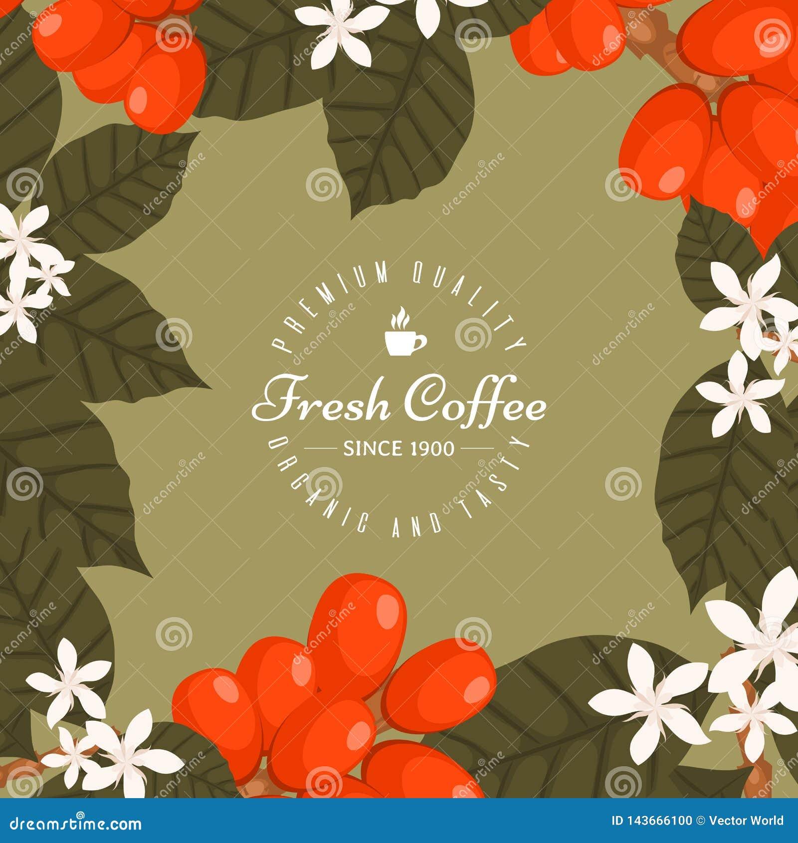 Cartel de la cafetería, ejemplo del vector de la bandera Café de la mañana fresco y sabroso Granos de café orgánicos y superiores