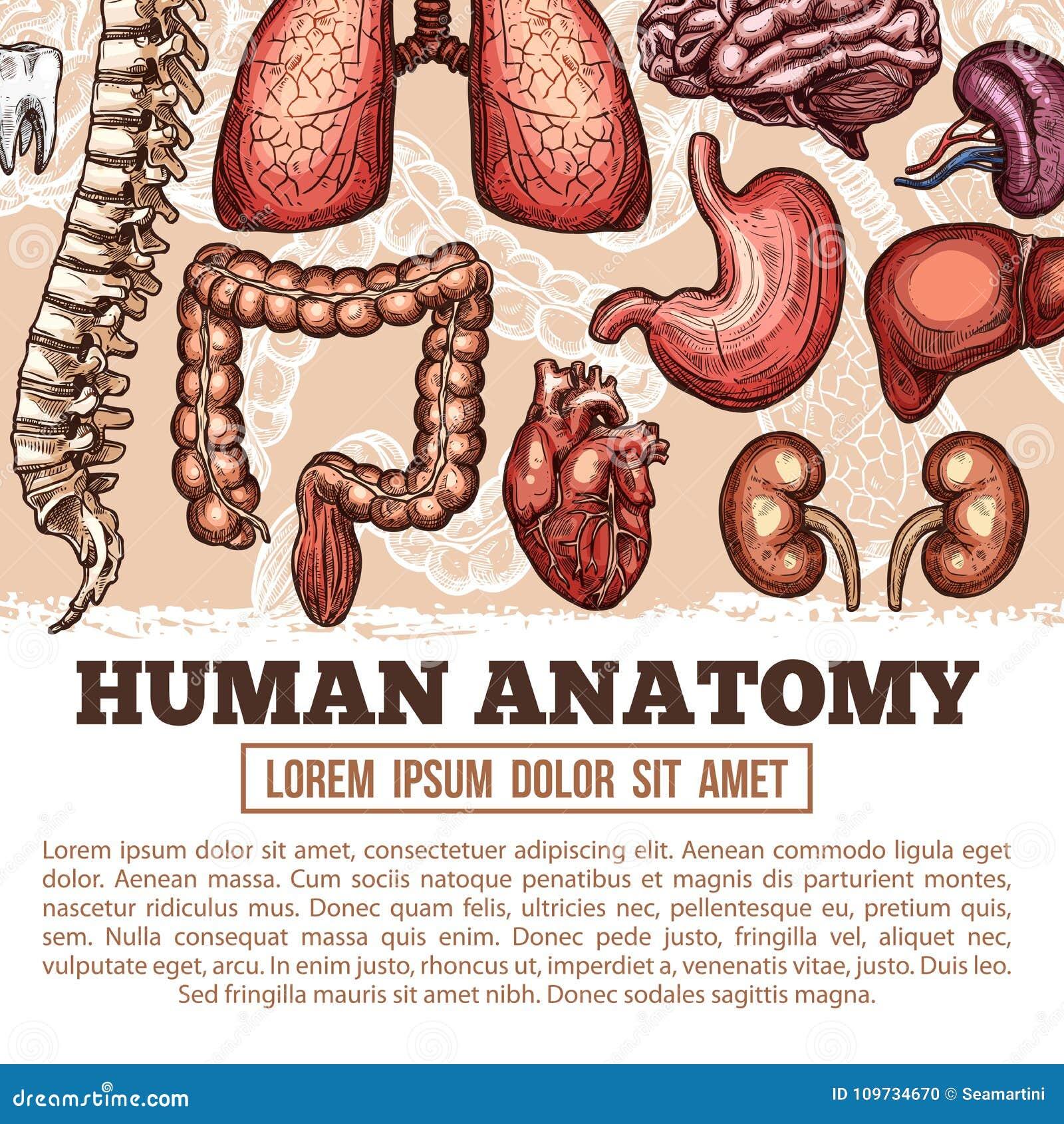 Increíble Anatomía De La Seducción Componente - Imágenes de Anatomía ...