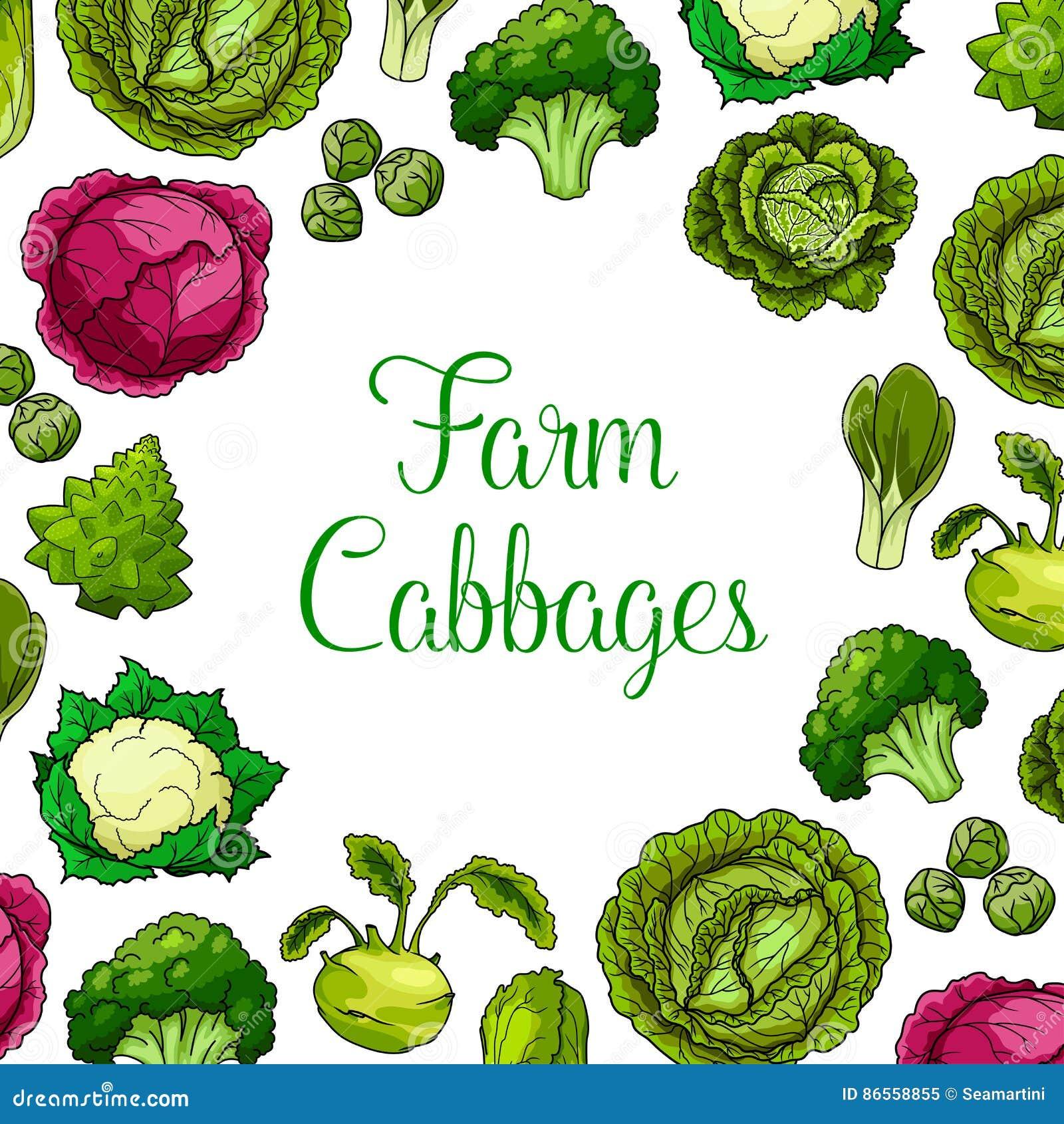 Cartel del vector de las verduras frondosas de la col