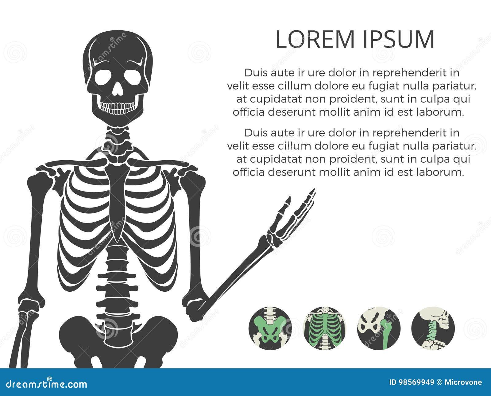 Cartel O Bandera Medicinal Con Skeletone Y Los Huesos Humanos ...