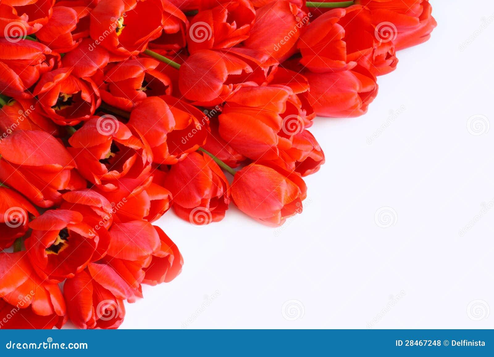 Favorito Cartolina D'auguri Con La Foto Di Riserva Dei Fiori (tulipani  PZ42