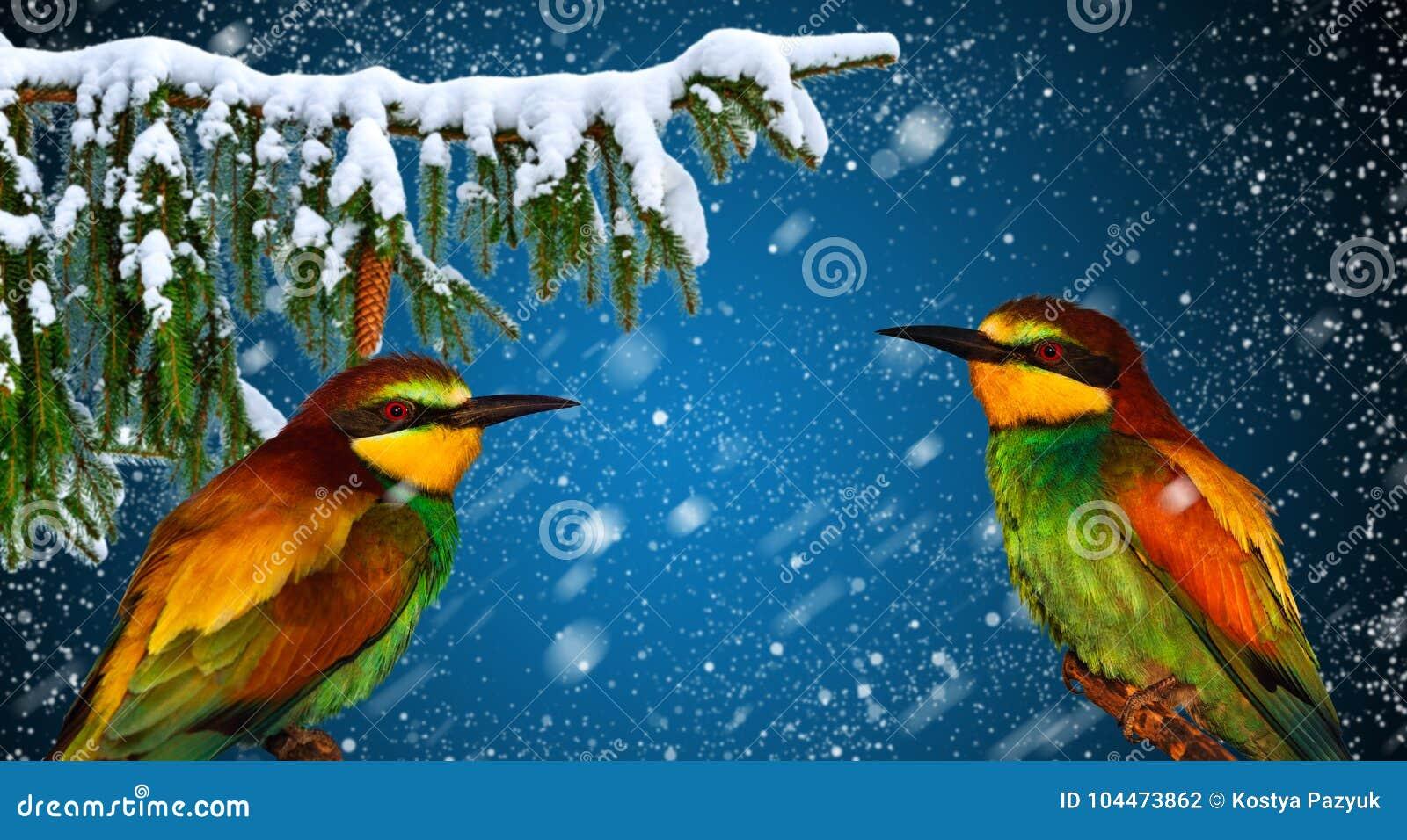 Cartolina d auguri di vacanza invernale con l uccello allegro due