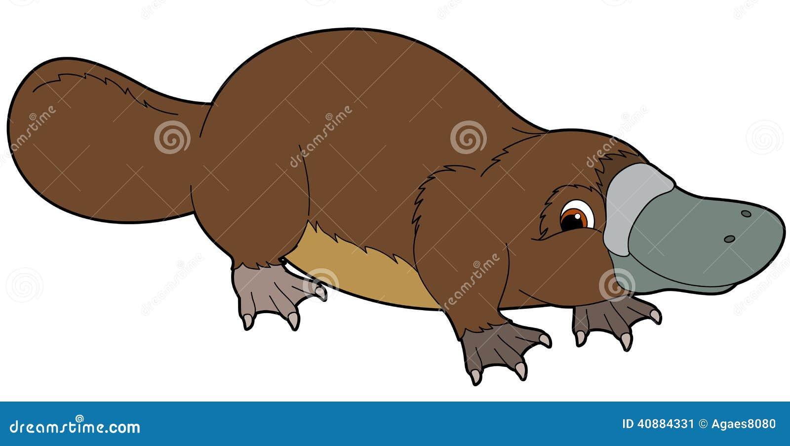 Clip Art Platypus Clipart platypus stock illustrations 297 cartoon animal illustration for the children image