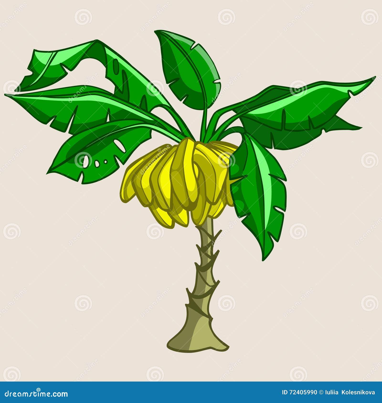 Cartoon Banana Tree With Bananas Stock Vector - Image: 72405990