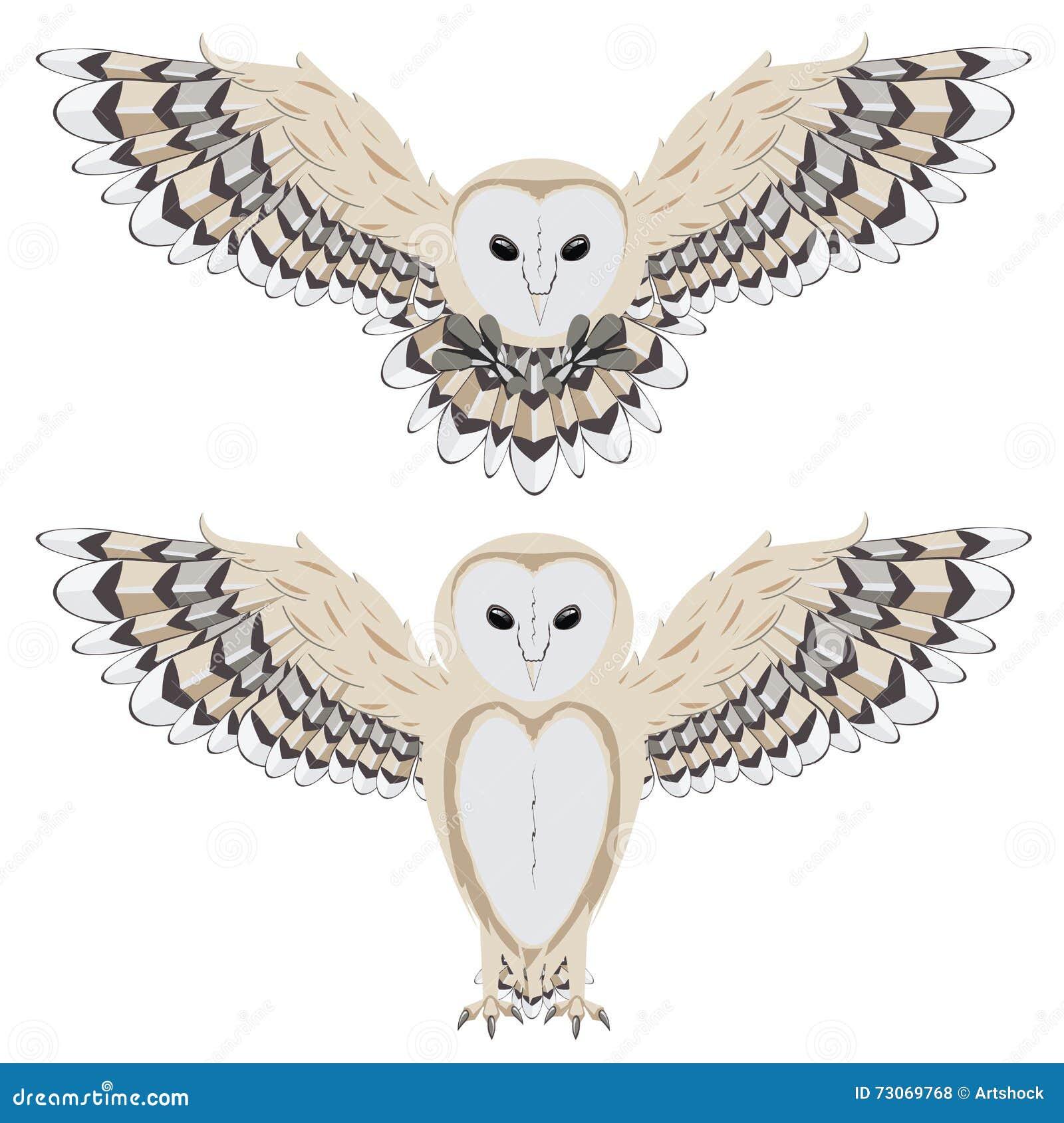 Cartoon barn owl stock vector image of graphic artwork for Cartoon owl sketch