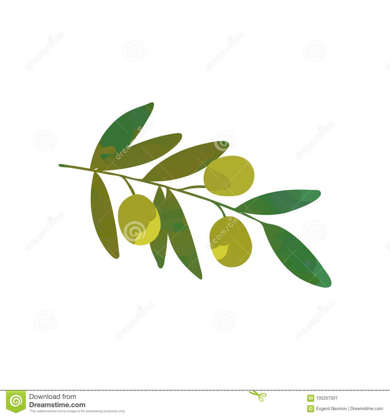 Cartoon branch of olive tree with green leaves traditional symbol cartoon branch of olive tree with green leaves traditional symbol of peace organic food product isolated flat vector buycottarizona Choice Image