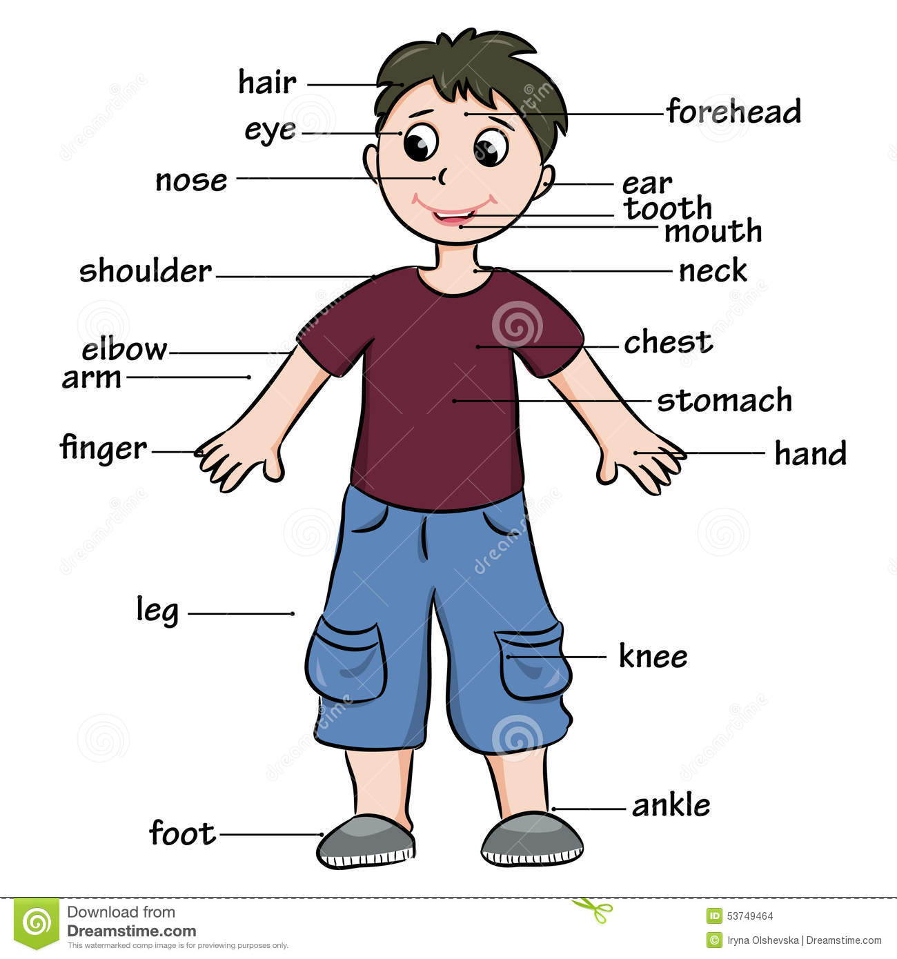 math worksheet : photography vocabulary worksheet in addition body parts vocabulary  : Kindergarten Body Parts Worksheet
