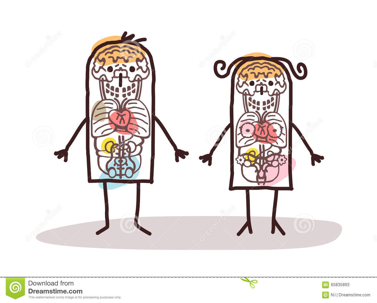 Cartoon Couple Anatomy Stock Vector Illustration Of Woman 65835893
