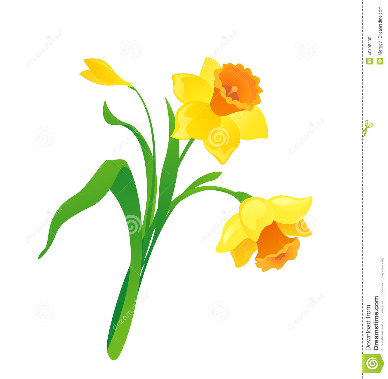 Cartoon Daffodil Stock Vector - Image: 40798330