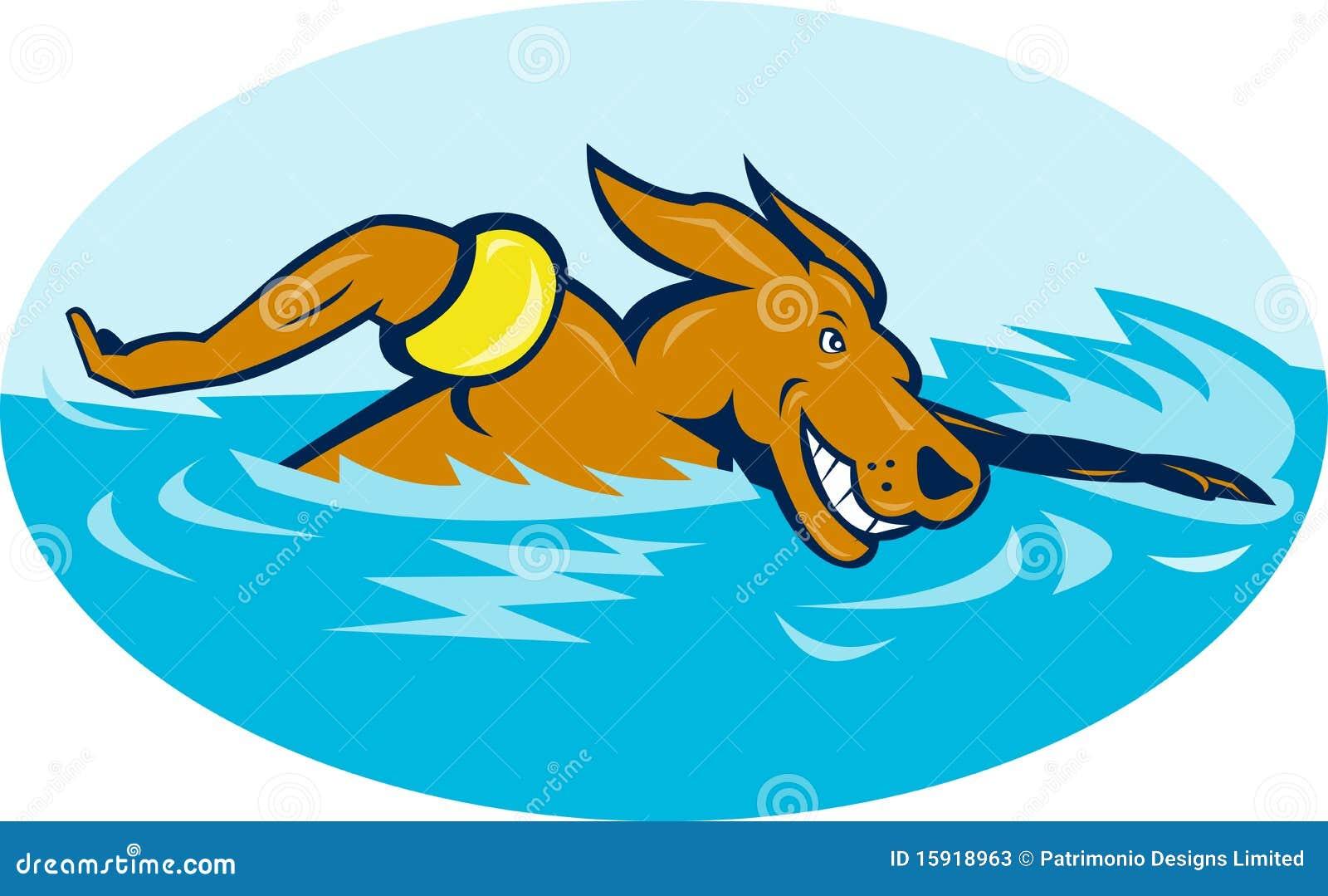 Cartoon Dog Swimming Stock Illustrations 404 Cartoon Dog Swimming Stock Illustrations Vectors Clipart Dreamstime