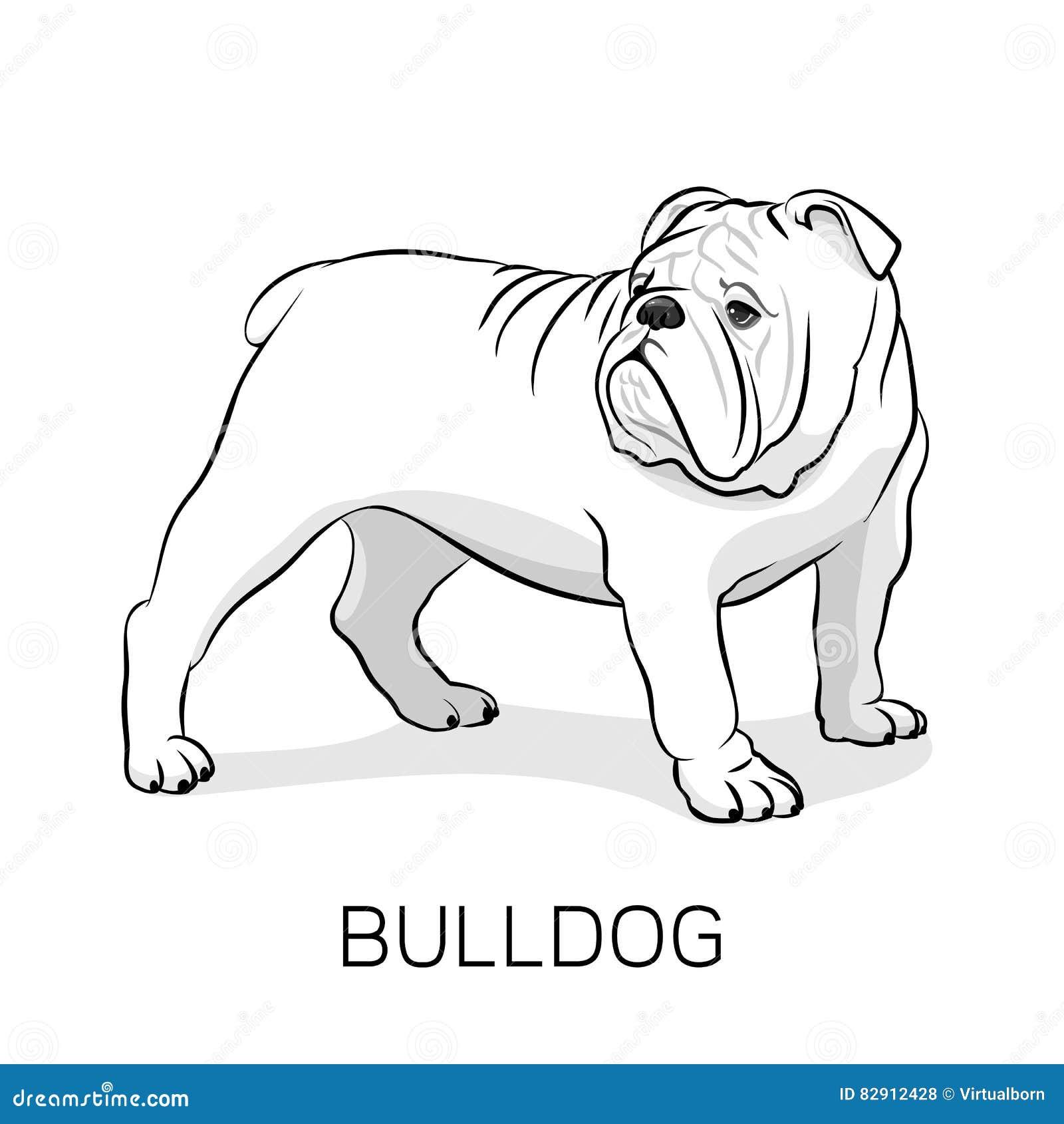 Cartoon English Bulldog Dog Illustration Stock Vector Illustration
