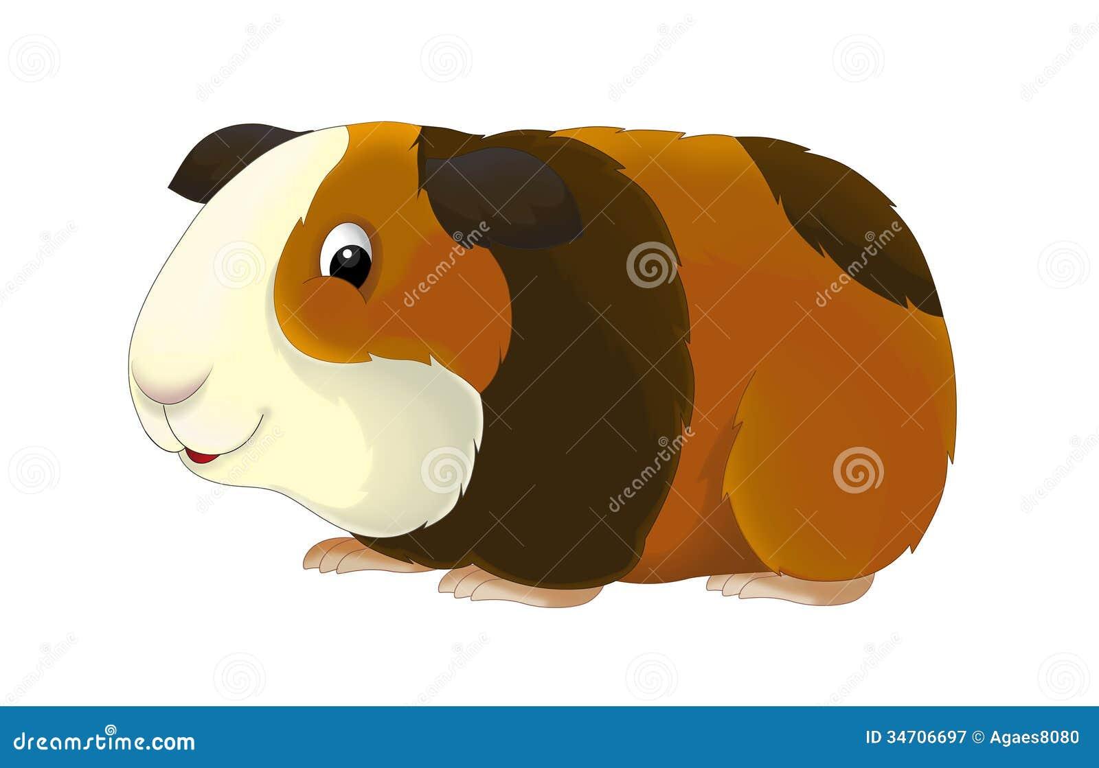Guinea Pig Clip Art Free