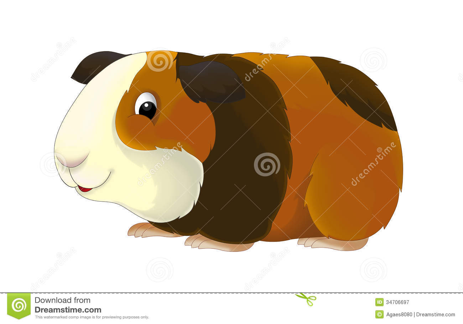 The Cartoon Guinea Pig Illustration For Children Royalty Free