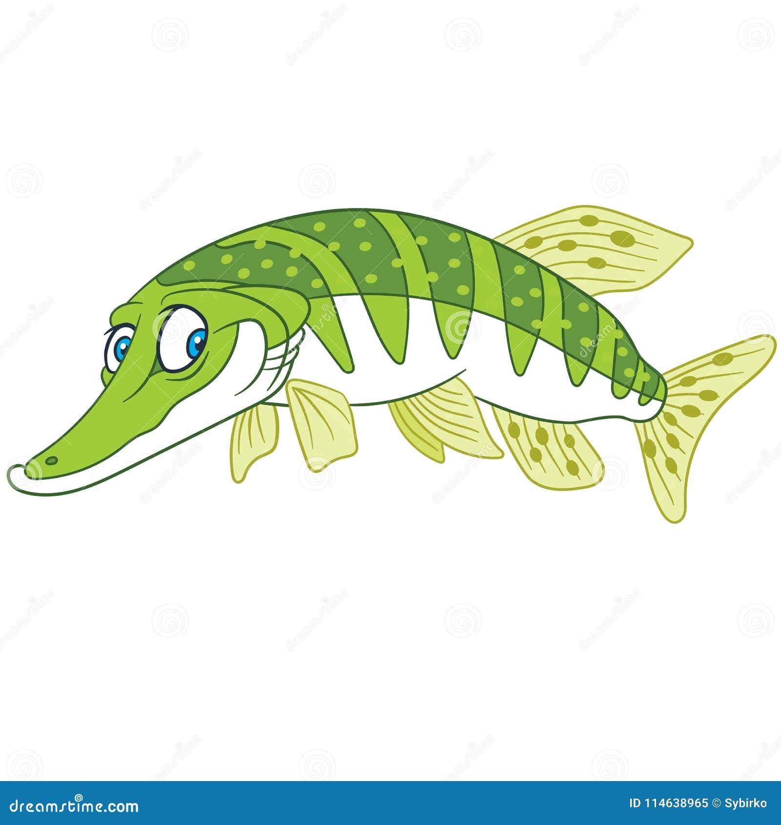Pike Fish Stock Illustrations – 1,585 Pike Fish Stock Illustrations ...