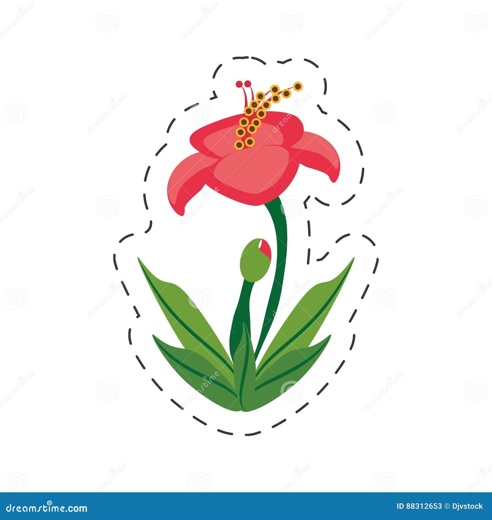 Cartoon Hibiscus Flower Image Stock Illustration Illustration Of