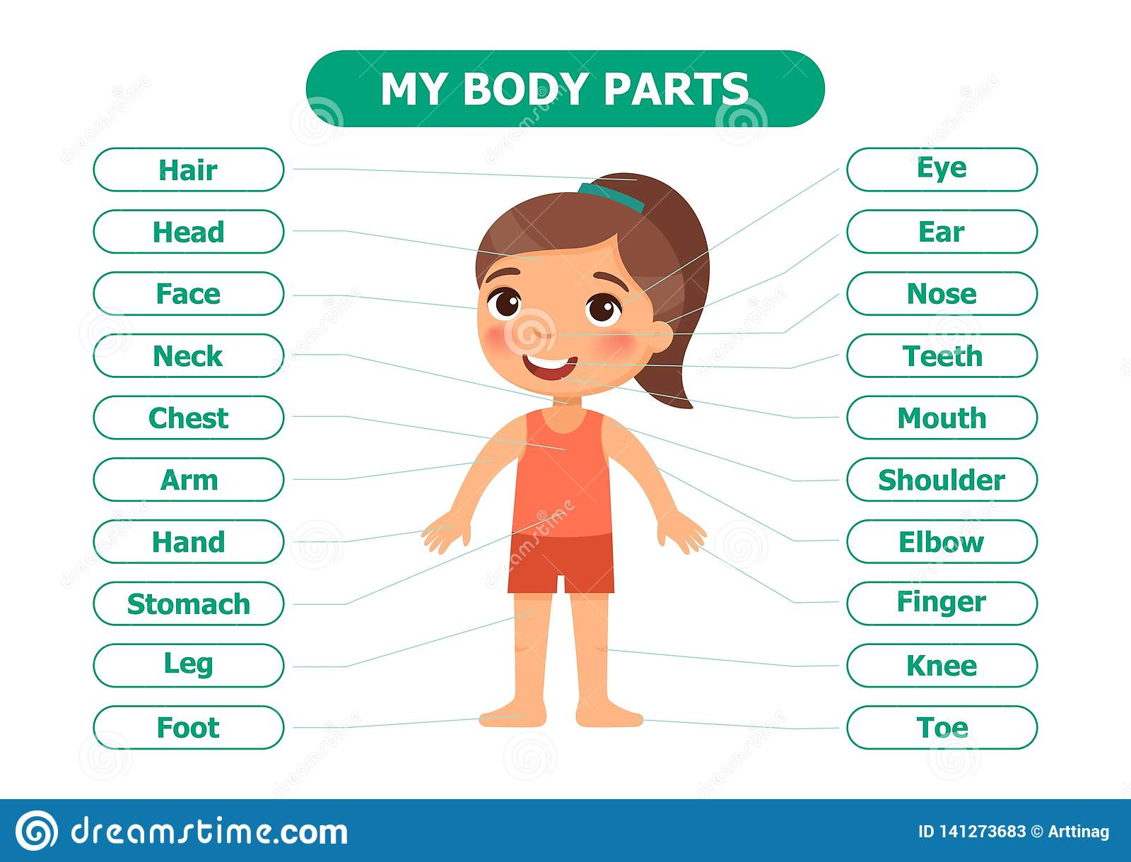 My Body Parts - Anatomy For Children  Stock Vector - Illustration of