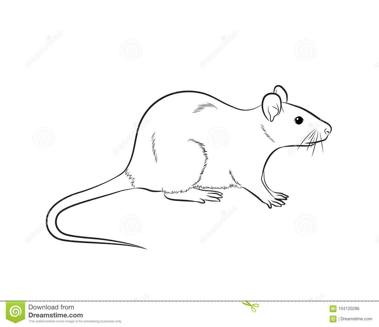 Cartoon Mouse Drawing Vector Stock Illustration - Illustration of ...