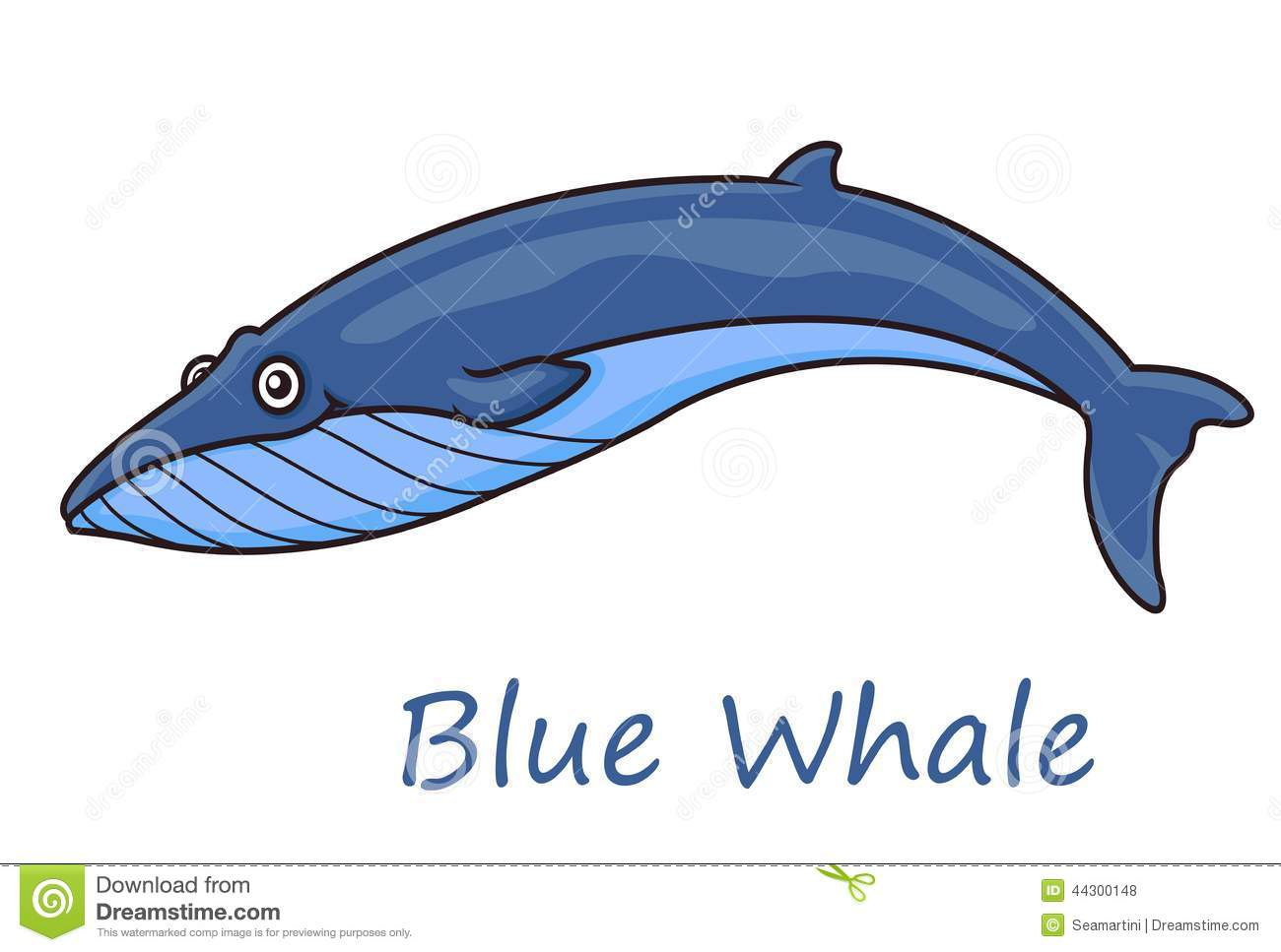 the background information on the blue whale Whale watching in cook strait and the direction the whale or whales were travelling background information with blue and sperm whales and orca also seen.