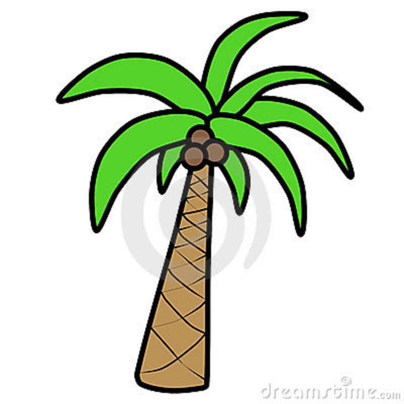 Cartoon Palm Tree Cartoon Palm Tree 13375081 Jpg