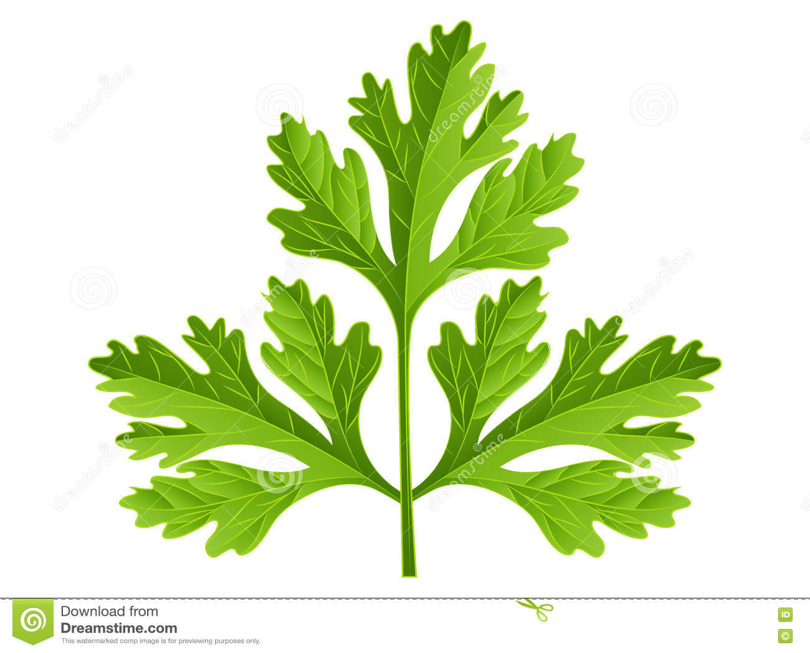 Cartoon Parsley stock vector. Illustration of vegan, healthy - 81447081