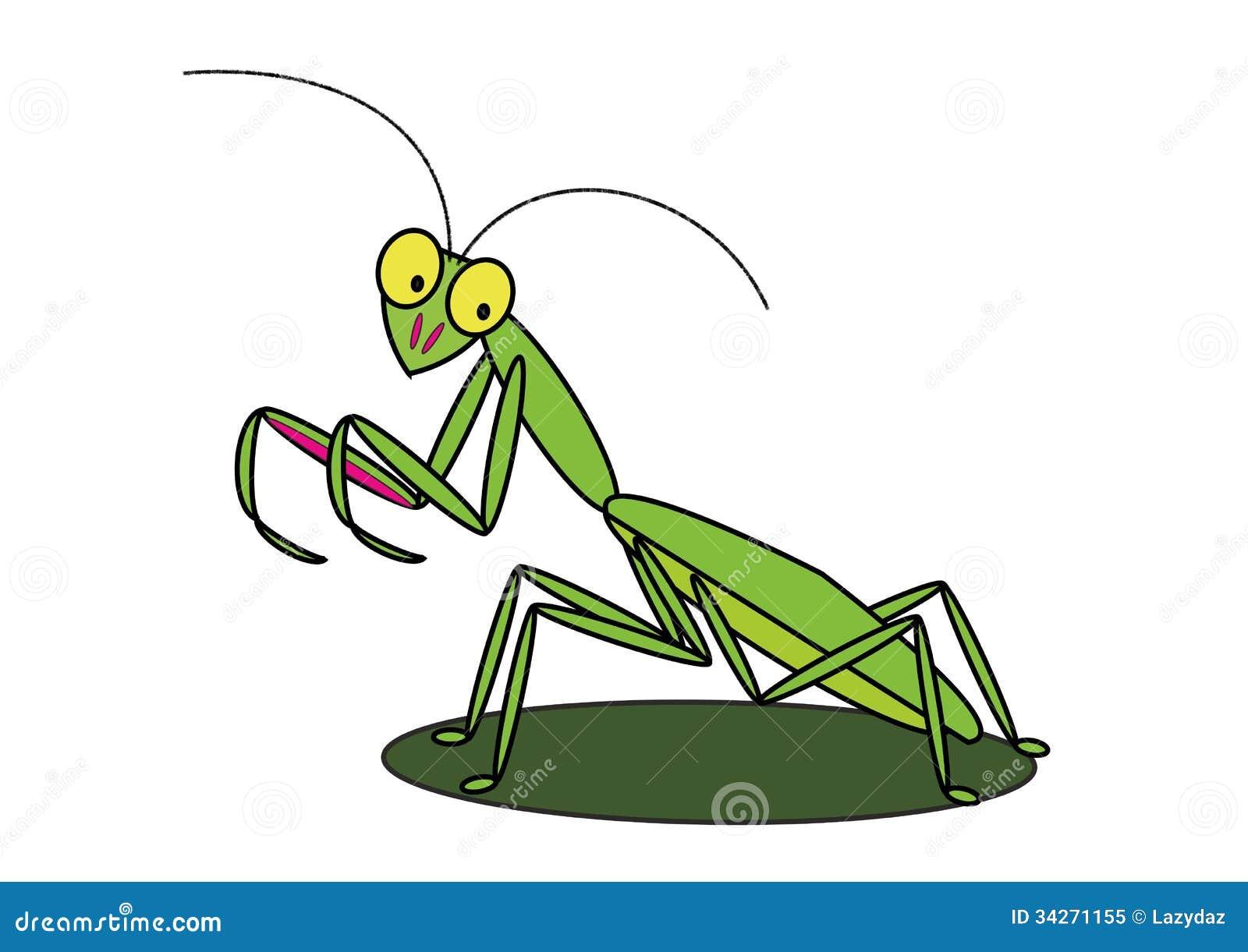 Praying Mantis Illustration