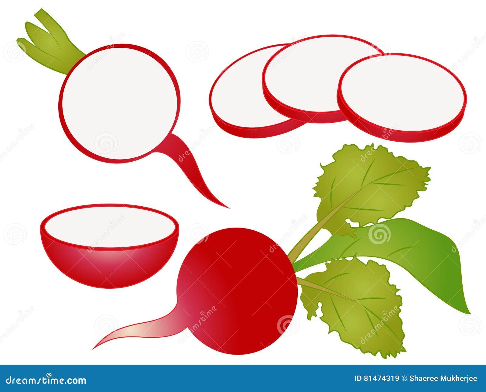 cartoon radish clipart stock vector illustration of vector 81474319 rh dreamstime com radish image clipart radish plant clipart