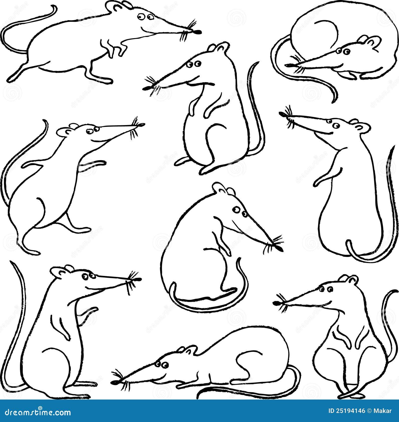 Line Drawing Rat : Cartoon rat stock vector illustration of vertebrate