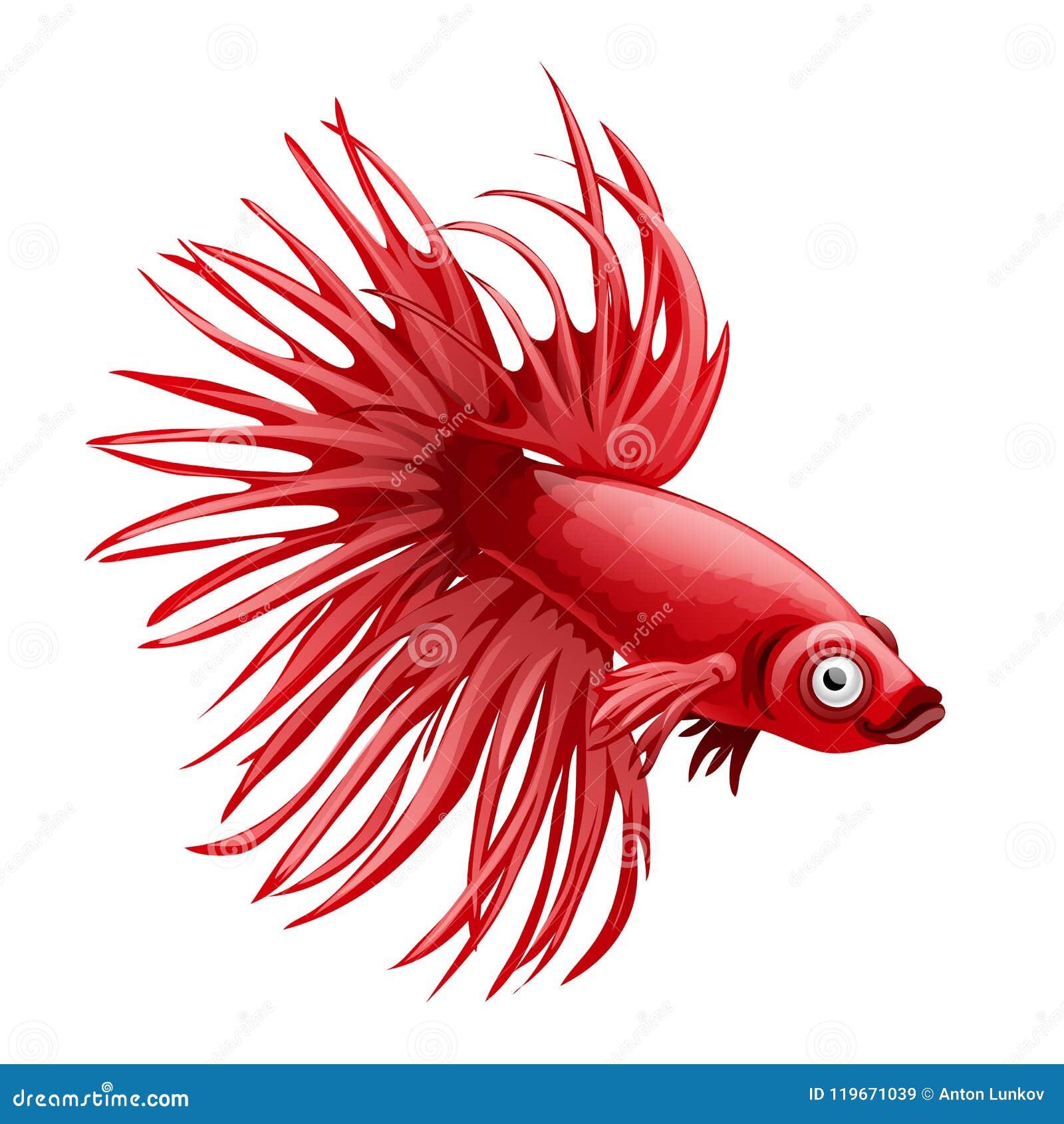 Cartoon Red Betta Fish, Siamese Fighting Fish, Betta Splendens Crown ...