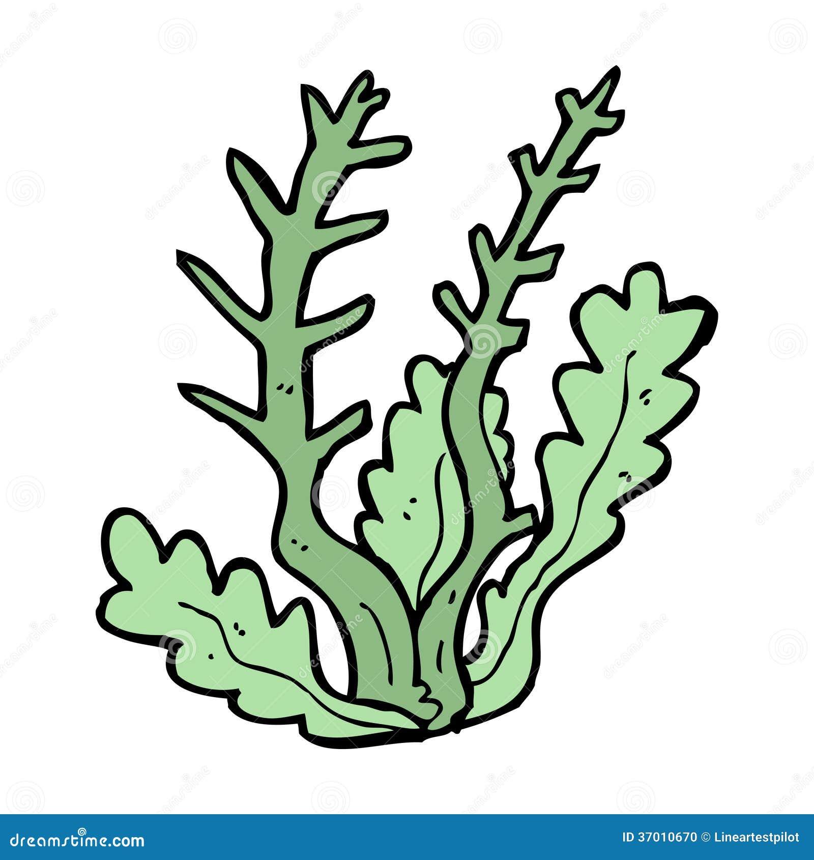 Cartoon Seaweed Clipart cartoon seaweed Stock Photo