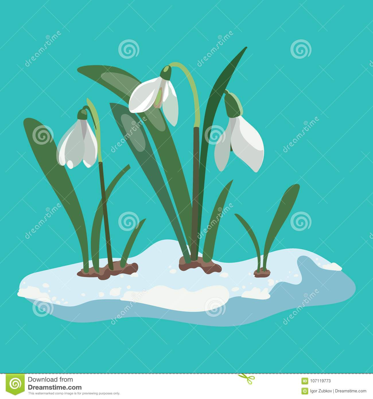 Cartoon Snowdrop Illustration Of A Spring Flower Drawing Stock