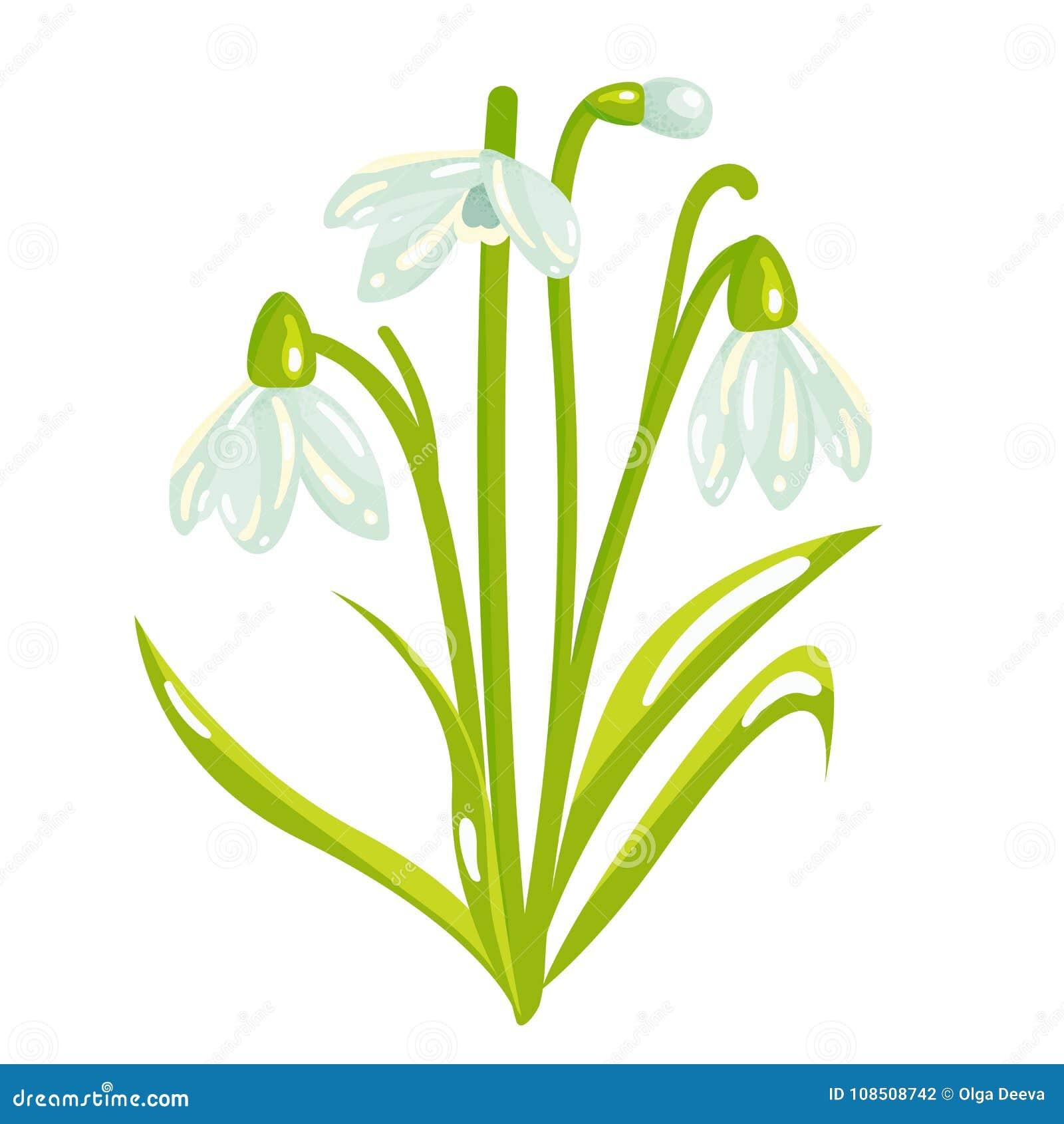 Cartoon Snowdrop Spring Flower Illustration Stock Vector