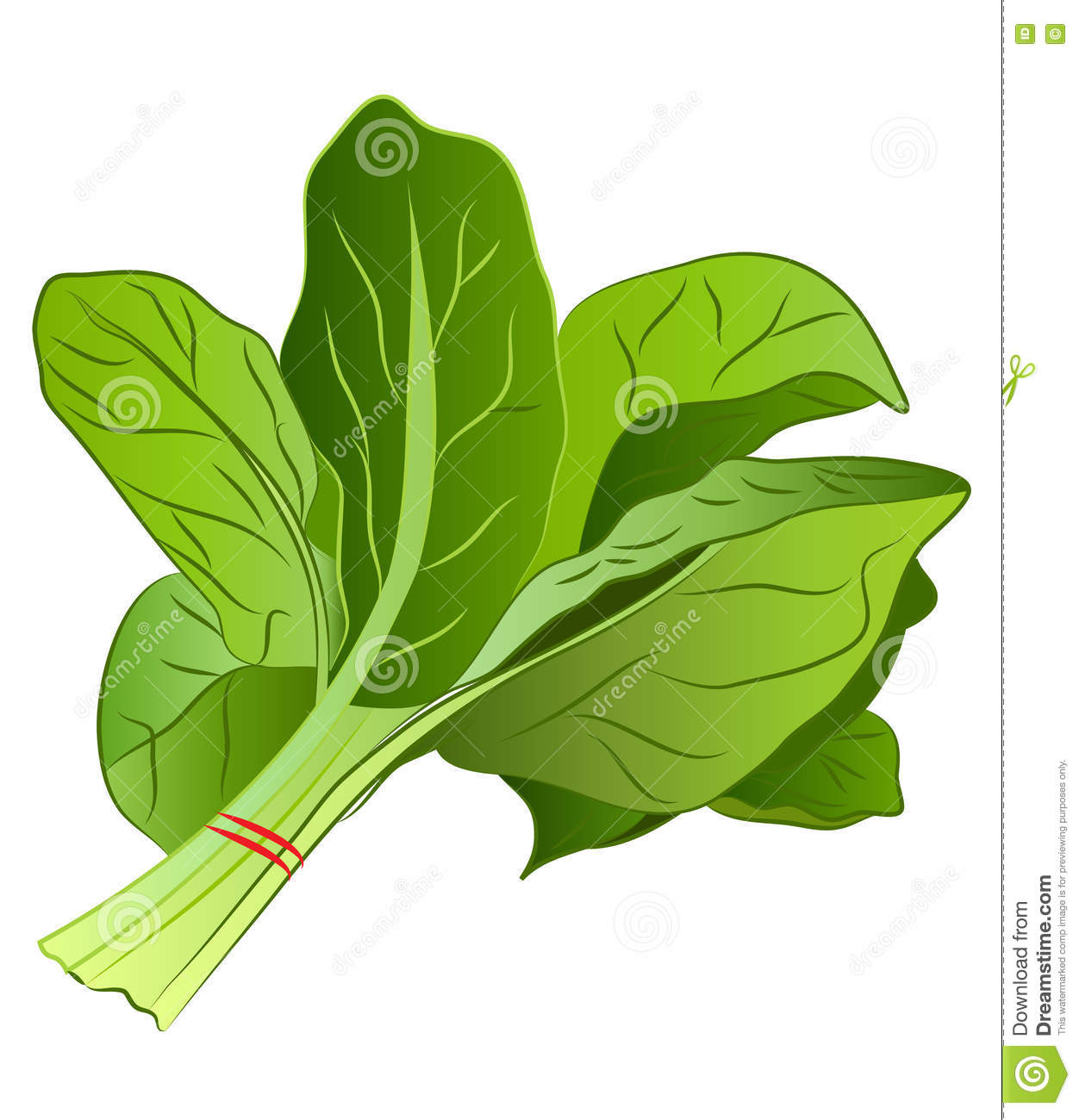 Spinach Cartoons Illustrations Amp Vector Stock Images
