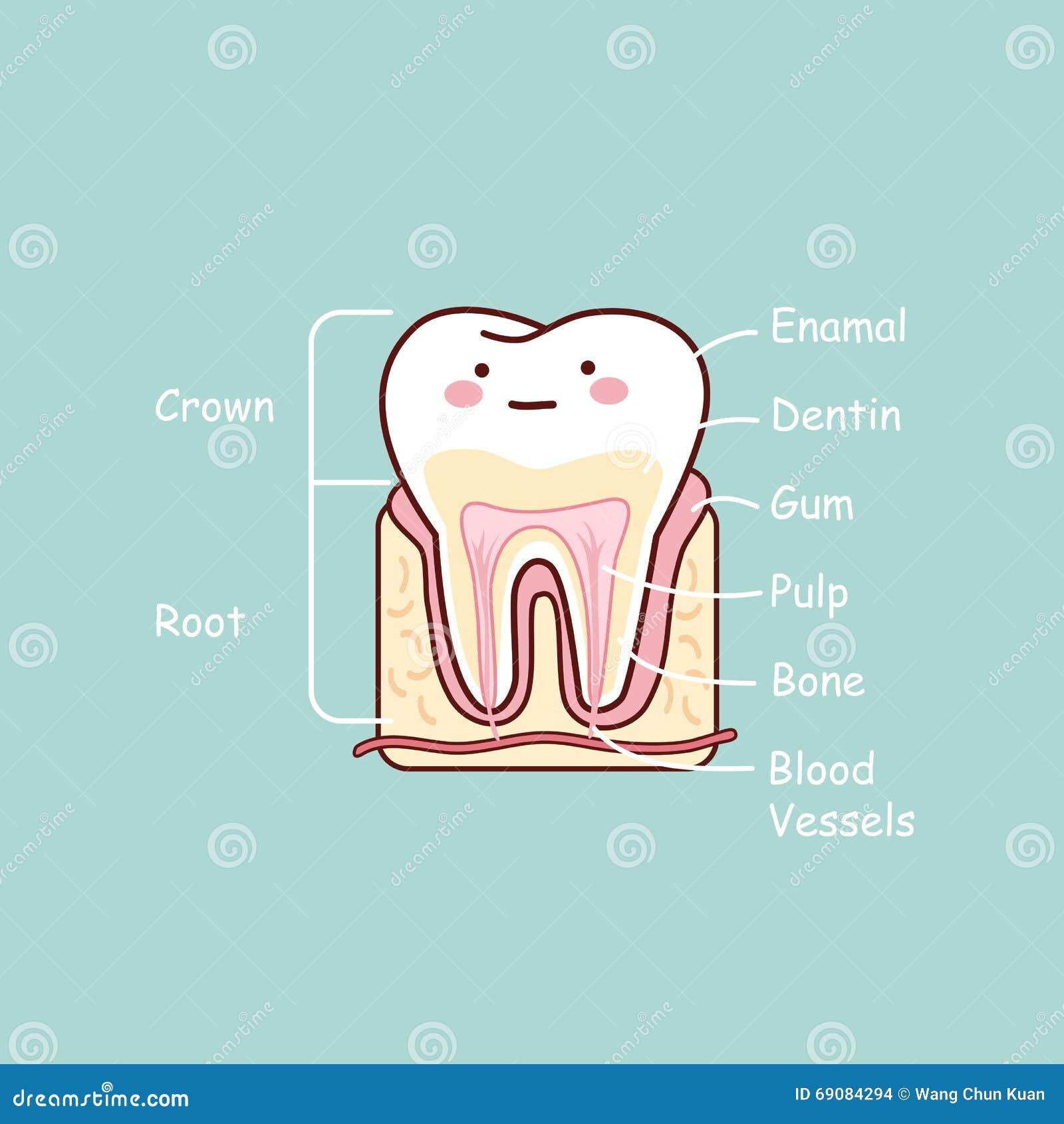 Vecteur clipart de main sur 201 cologie conscience image concept - Cartoon Illustration Of Human Neuron Anatomy Stock Vector Image Cartoon Tooth Anatomy Chart Stock Images Monardofo
