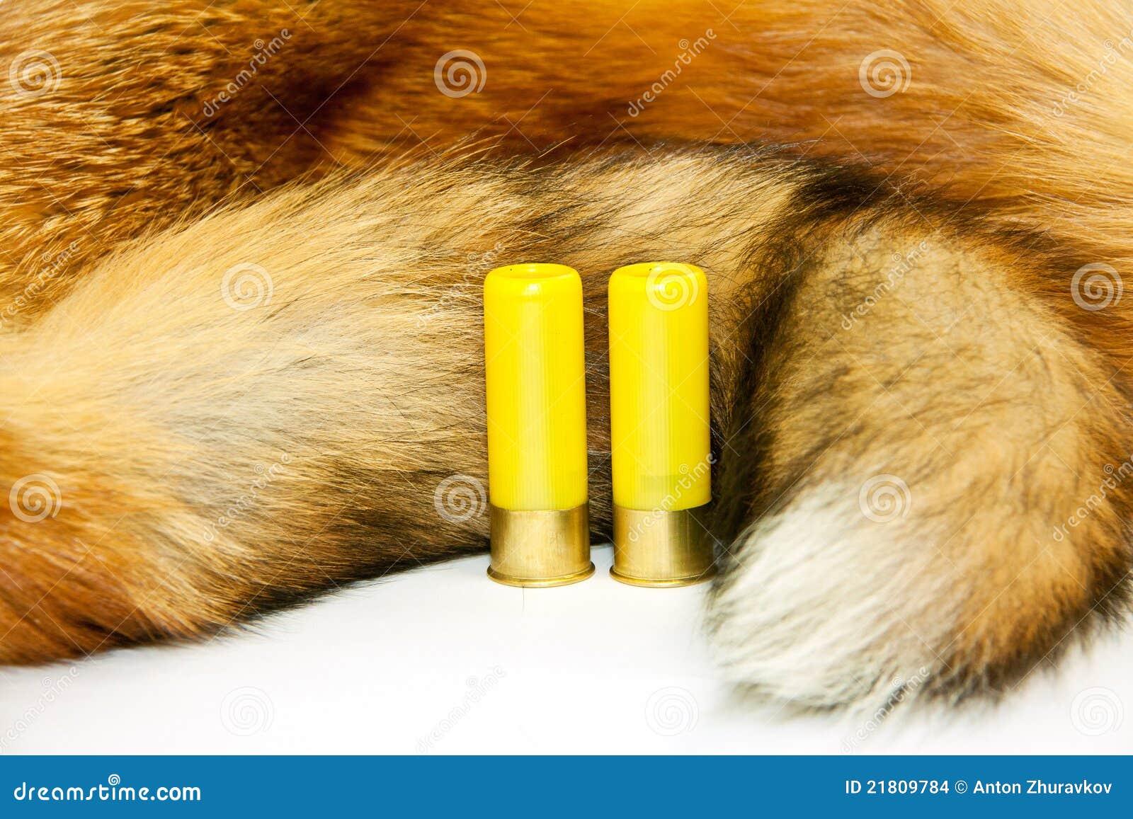 Cartridges on red fox fur