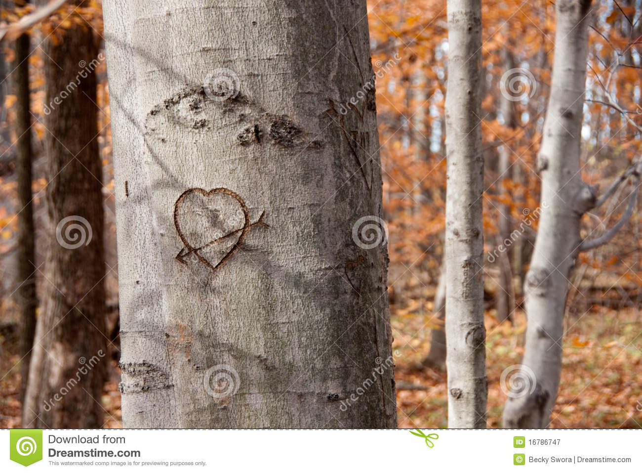 Carved Heart on Tree