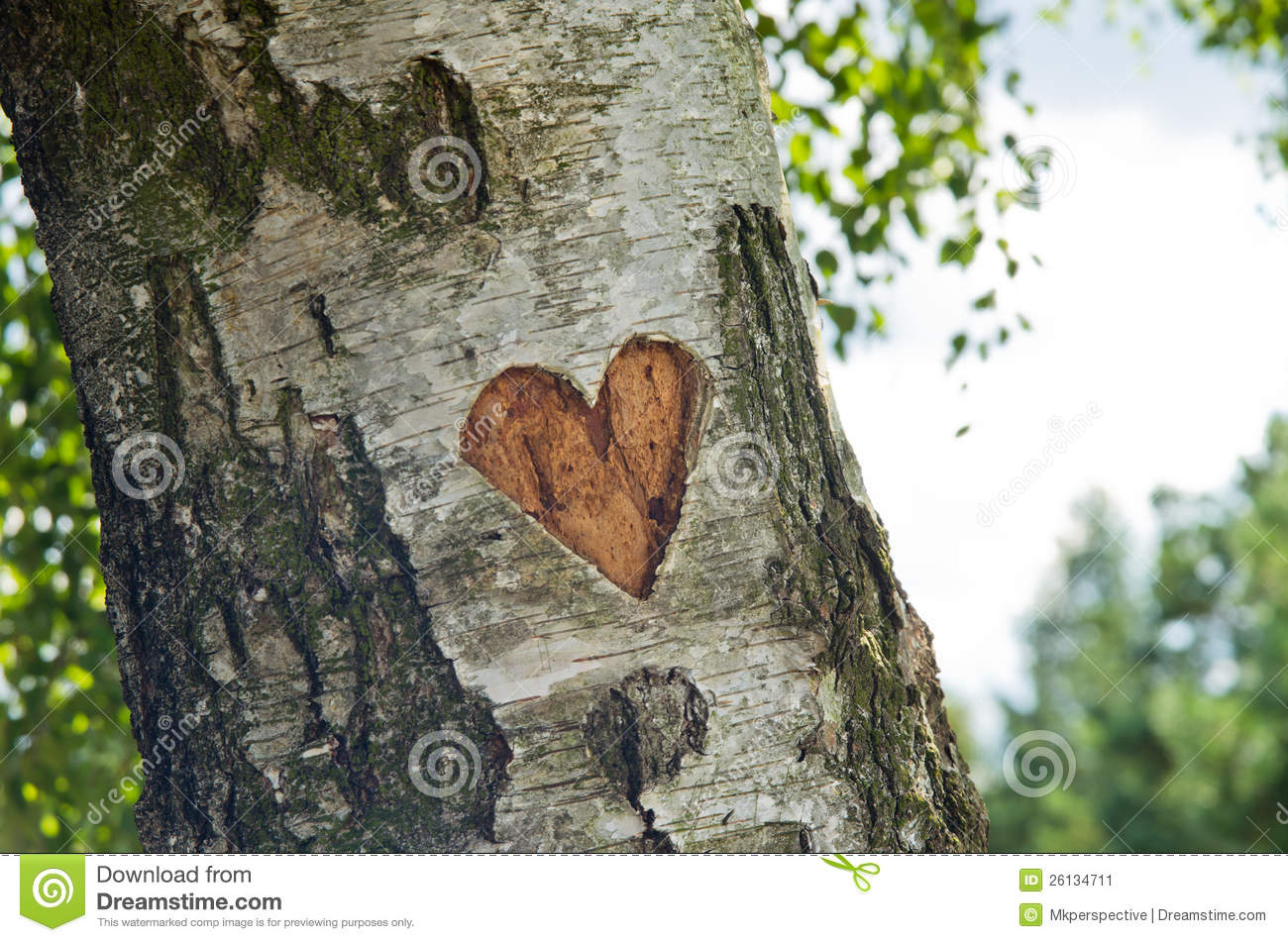 Carved heart in tree stock image of poetical shape