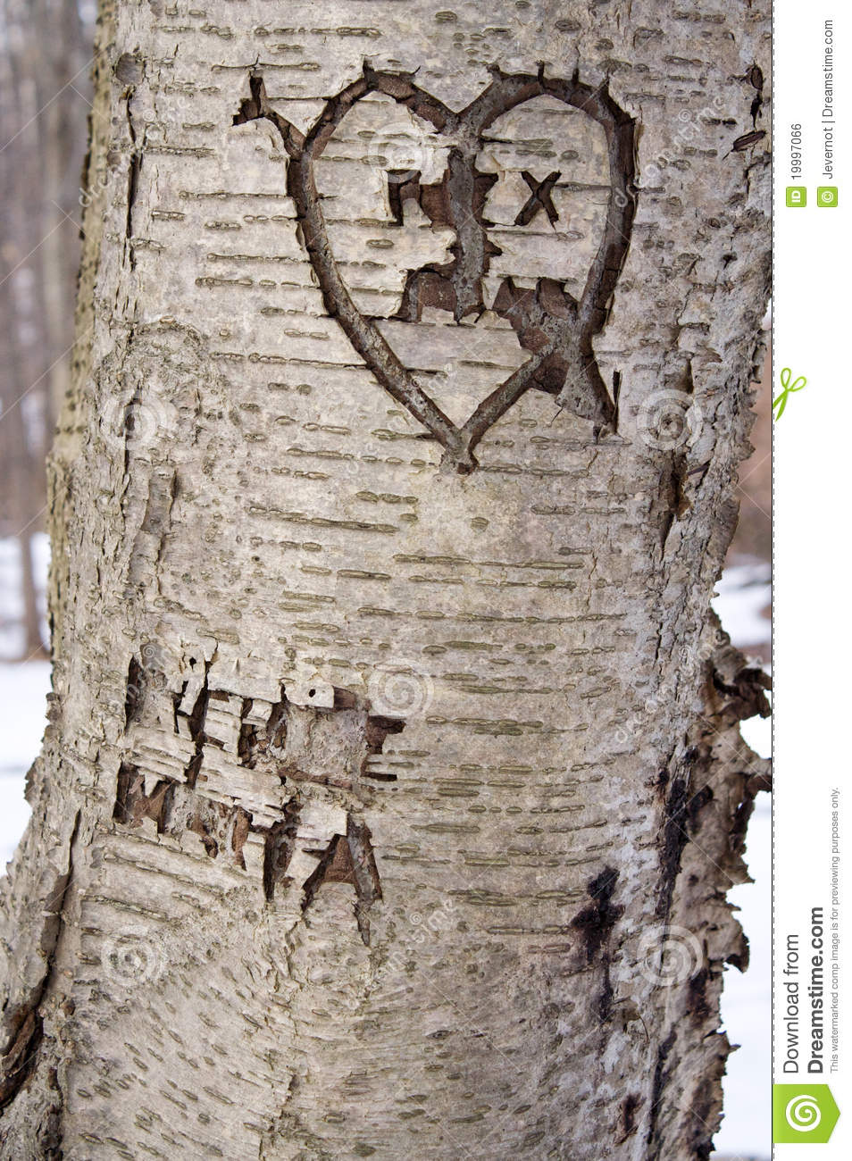 Carved love tree stock photo image of park leaf happy
