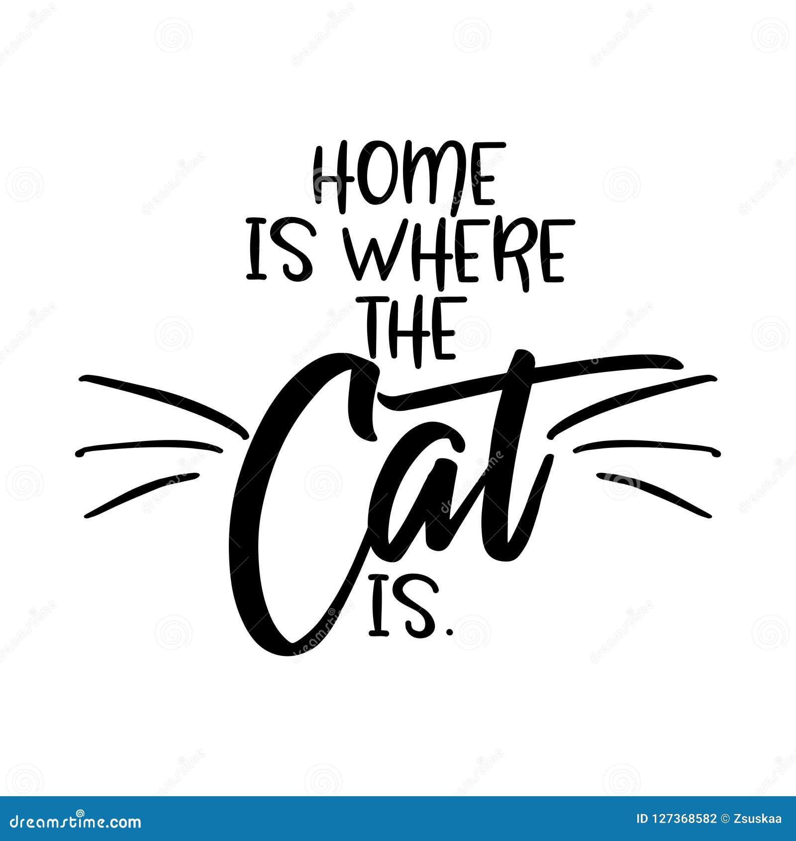 A casa é o lugar onde o gato está