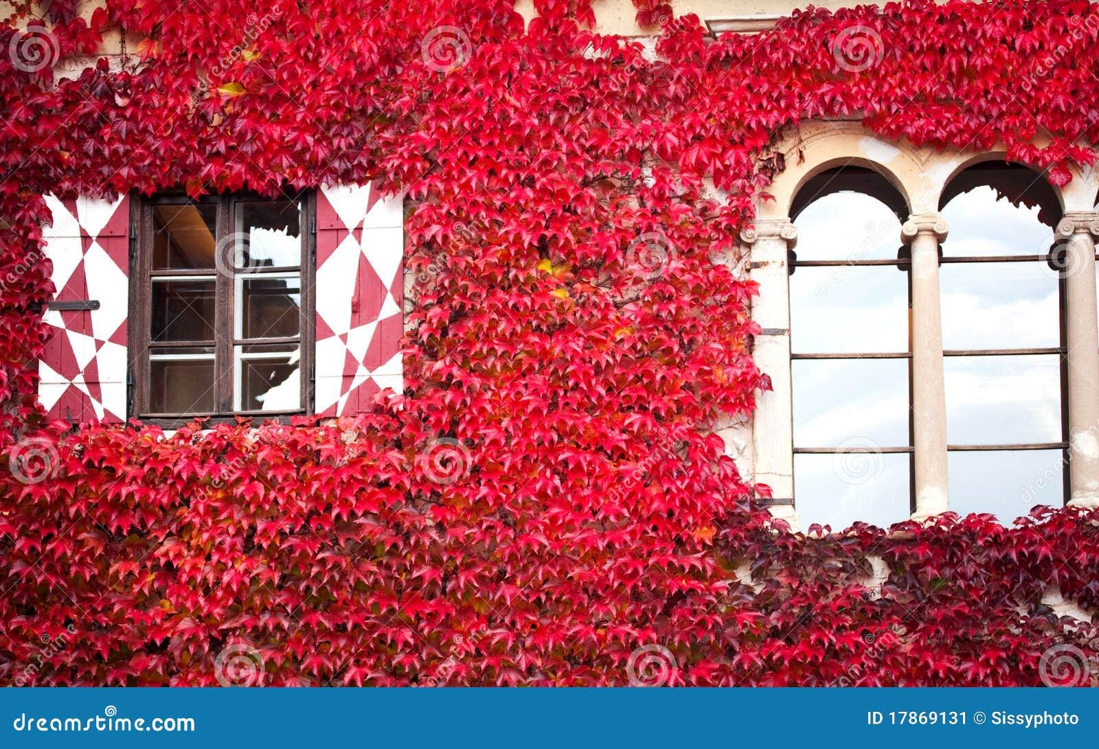 casa con la hiedra roja imagen de archivo imagen de cubo
