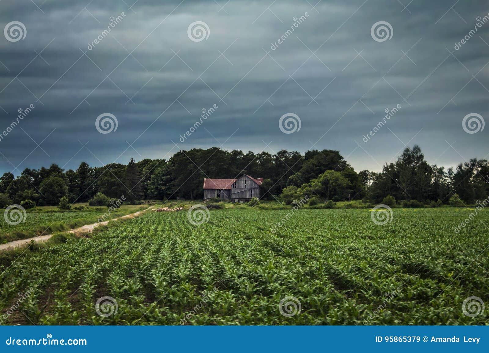 Casa da quinta abandonada no campo