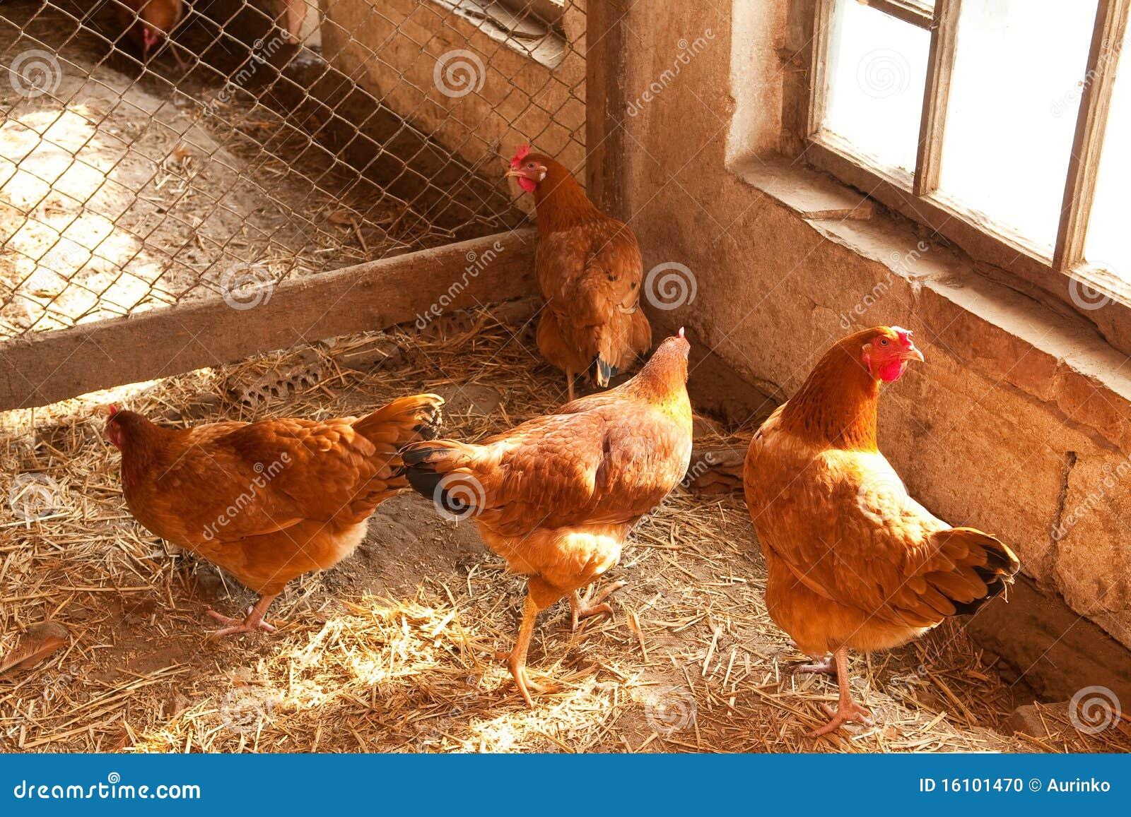Casa de gallina foto de archivo imagen de hovel grupo 16101470 - Casas para gallinas ...