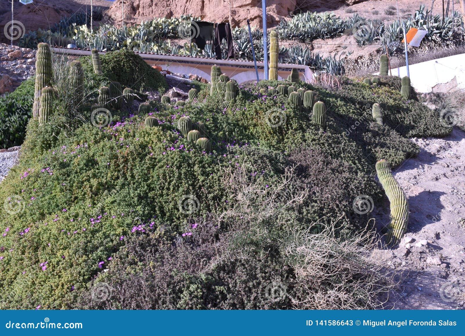 Casa de la cueva en el desierto de Gorafe con área plantado con el cactus