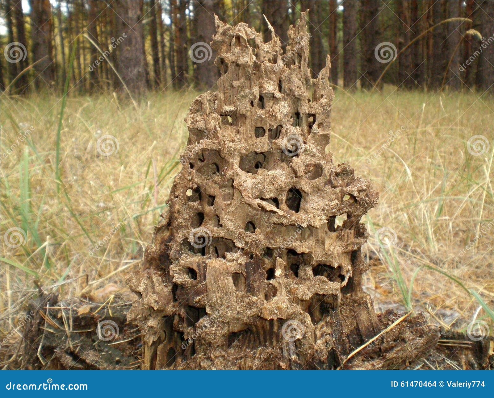 Casa de la hormiga foto de archivo imagen de trabajo 61470464 - Casa de hormigas ...