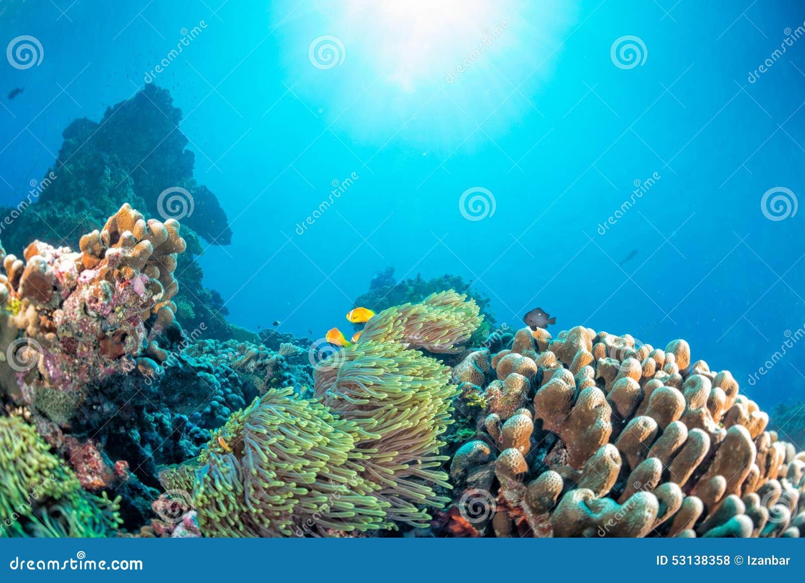 Casa de los corales de Maldivas para los pescados