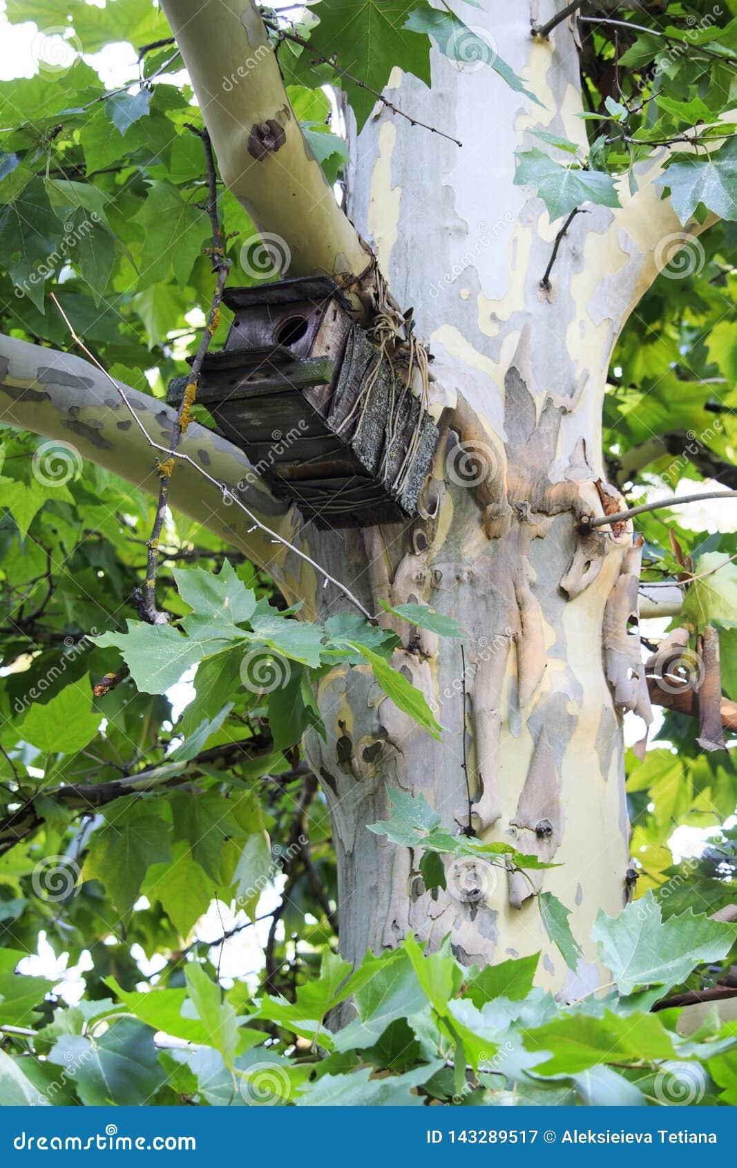 Casa de madeira do pássaro que espera os pássaros