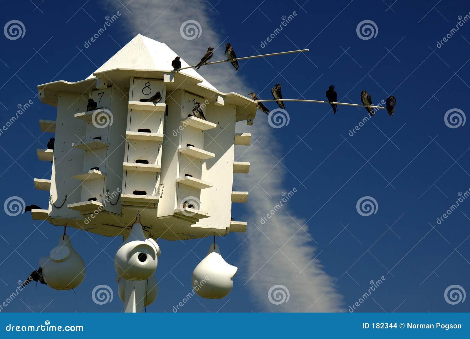 Casa del pájaro de Martin púrpura