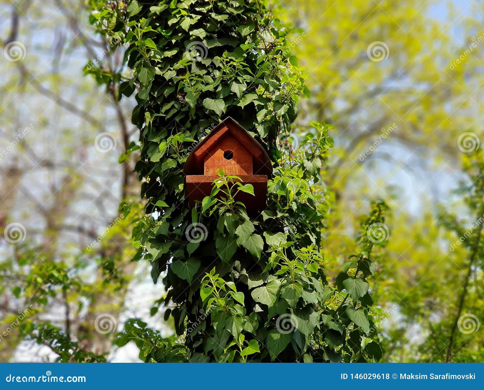 Casa do pássaro nas madeiras em um dia ensolarado