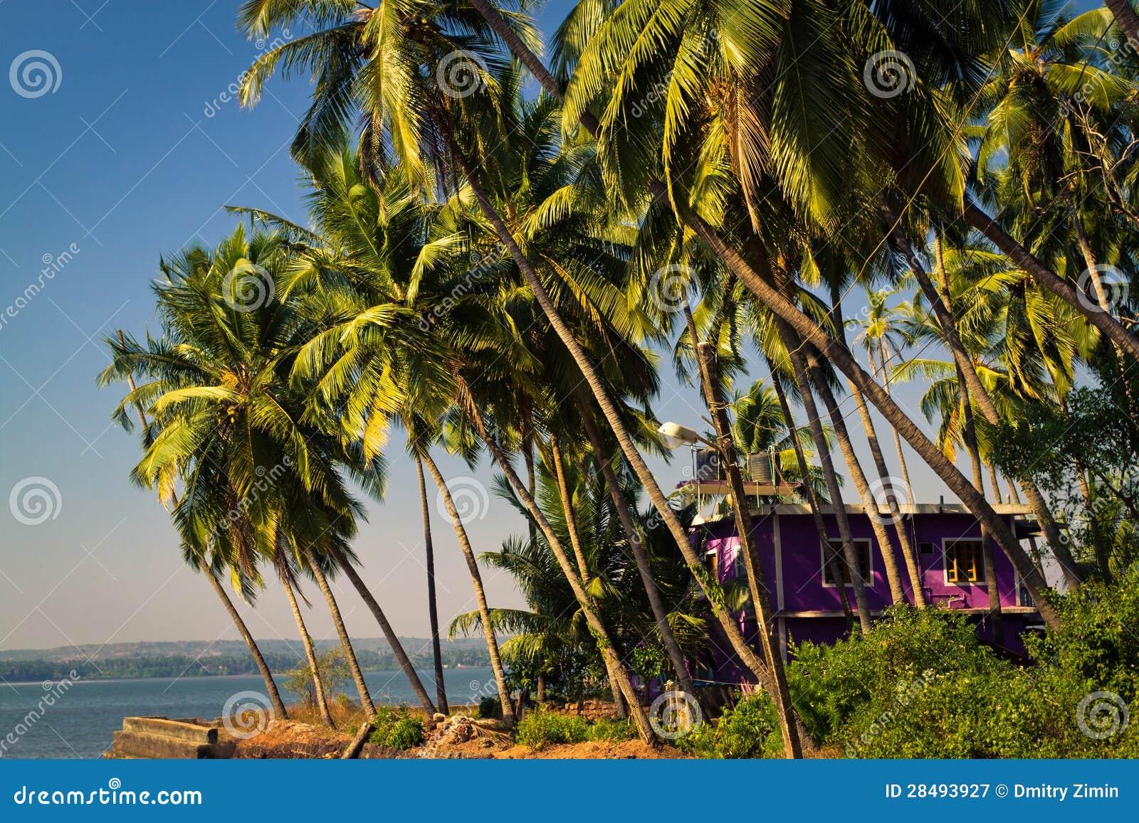 Casa Hermosa Enmarcada Por Las Palmeras En La Orilla De Mar Imagen ...