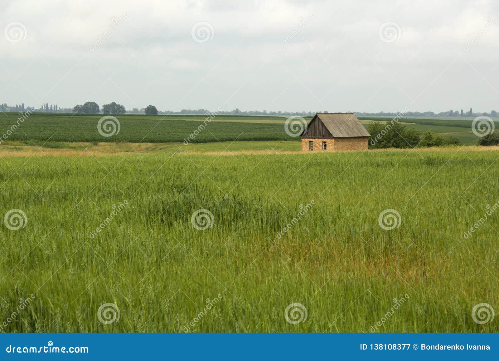 Casa pequena só no campo verde
