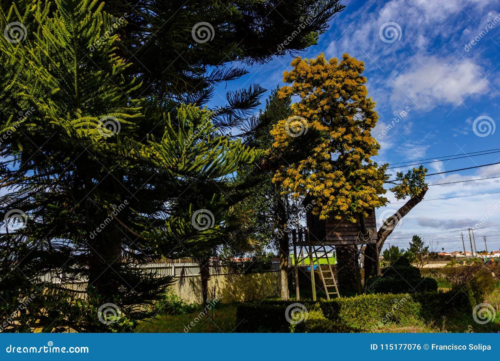 Casa Sull Albero Per I Bambini Nel Giardino Fotografia Stock